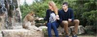 La forêt des singes - Rocamadour